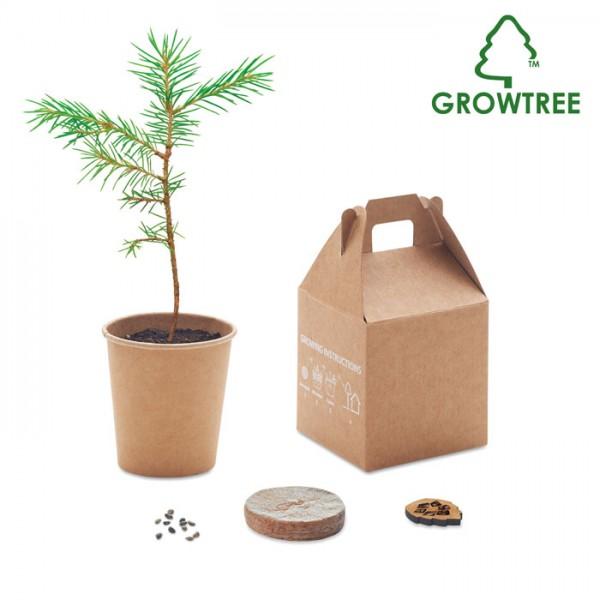 Growtree™ - Kiefernsamen-Set
