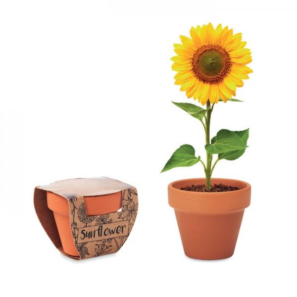 Sunflower - Terracotta-Topf Sonnenblume